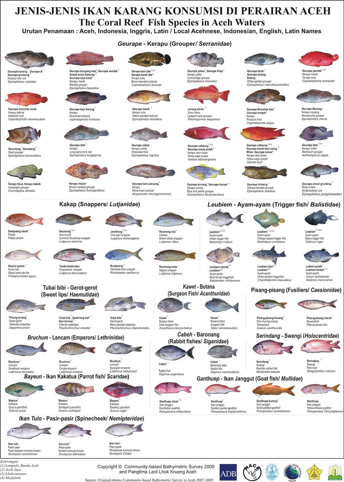 Ikan Karang Konsumsi Di Aceh Portal Belajar Bahasa Aceh